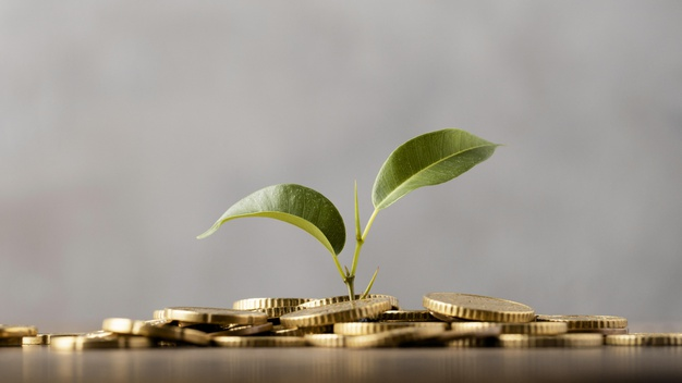 Photo | Front view of plant growing from golden coins